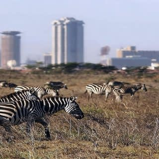 overview of Nairobi National Park
