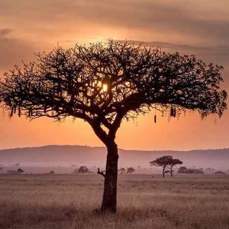 Sunset at the Open Plains of Serengeti in Tanzania