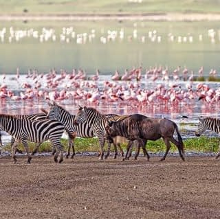 Amazing wildlife at the endless plains of Ngorongoro Area