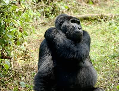 Chimpanzee Tracking